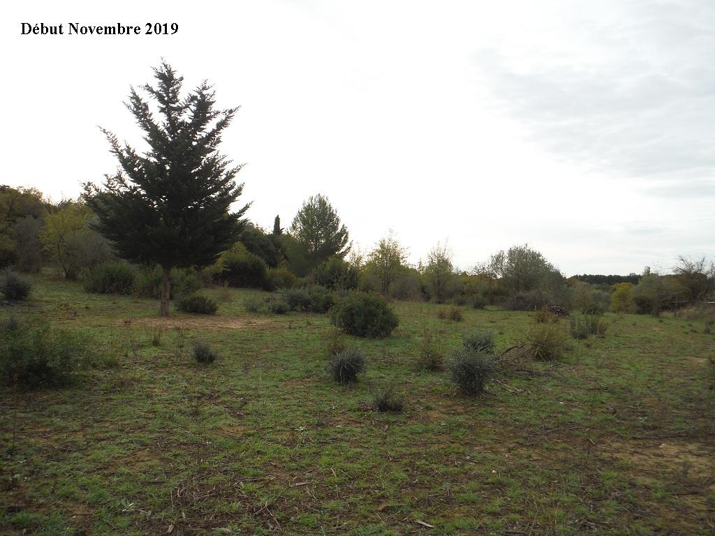 JdB de 4 hectares de pâtures dans le SUD : Janvier à la diète... + expérimentation - Page 13 3040pa10