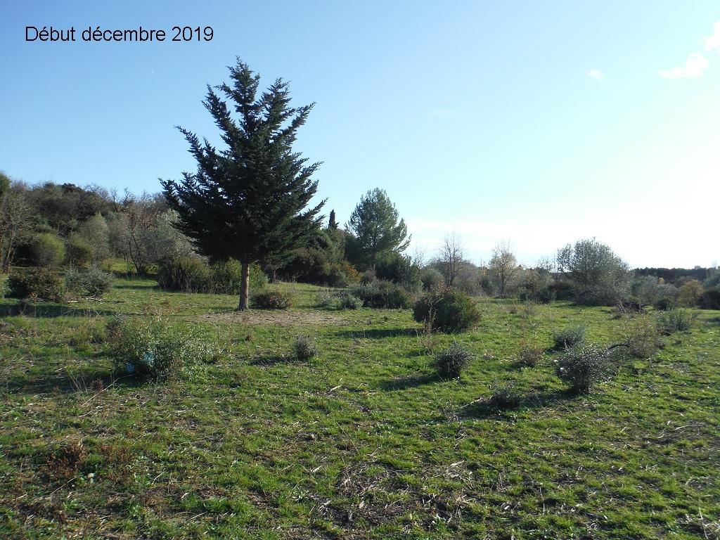 JdB de 4 hectares de pâtures dans le SUD : Janvier à la diète... + expérimentation - Page 13 3041pa10
