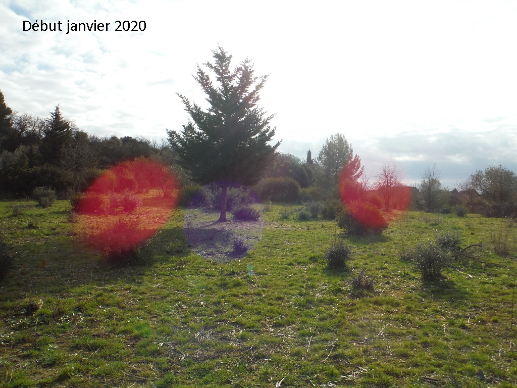 JdB de 4 hectares de pâtures dans le SUD : Janvier à la diète... + expérimentation - Page 13 3042pa10
