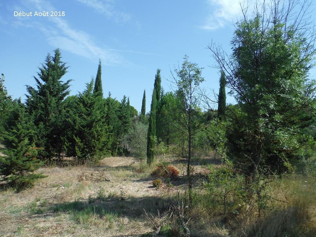 JdB de 4 hectares de pâtures dans le SUD : Avril 2019, et toujours la sécheresse... - Page 9 4026pa10