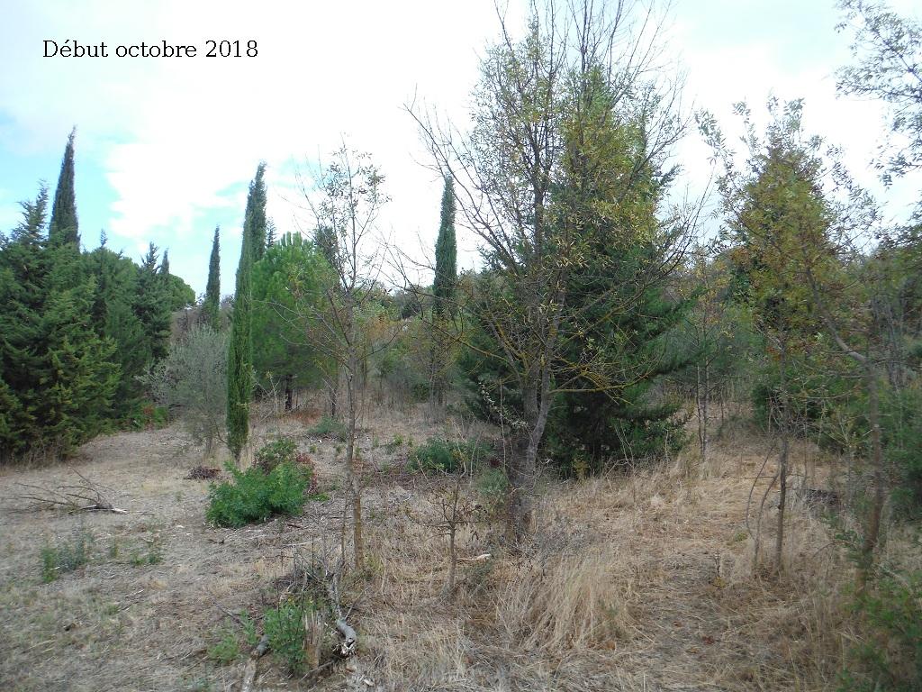 JdB de 4 hectares de pâtures dans le SUD : Avril 2019, et toujours la sécheresse... - Page 9 4027pa10
