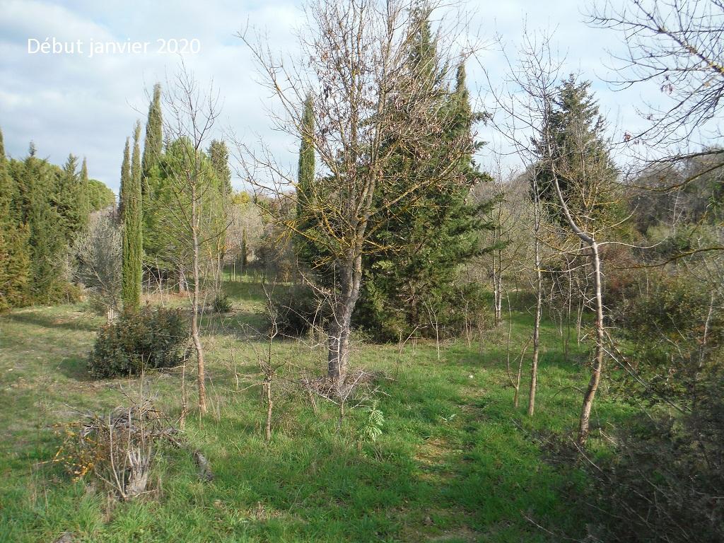 JdB de 4 hectares de pâtures dans le SUD : Janvier à la diète... + expérimentation - Page 13 4042pa10