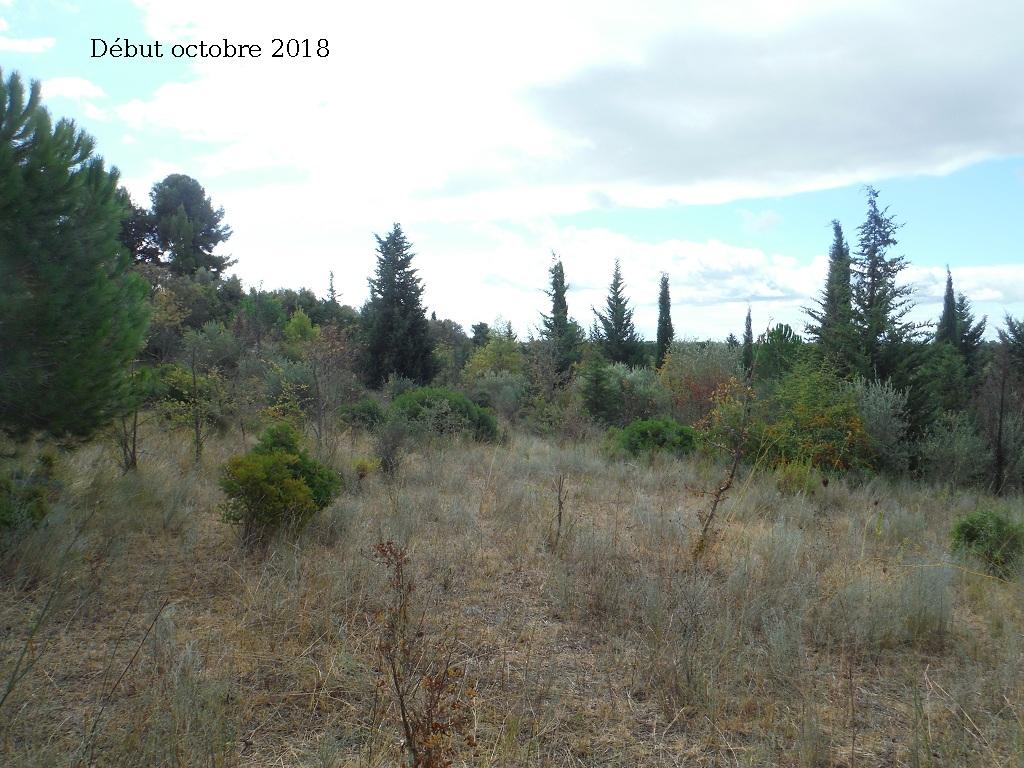 JdB de 4 hectares de pâtures dans le SUD : Avril 2019, et toujours la sécheresse... - Page 9 5027pa10