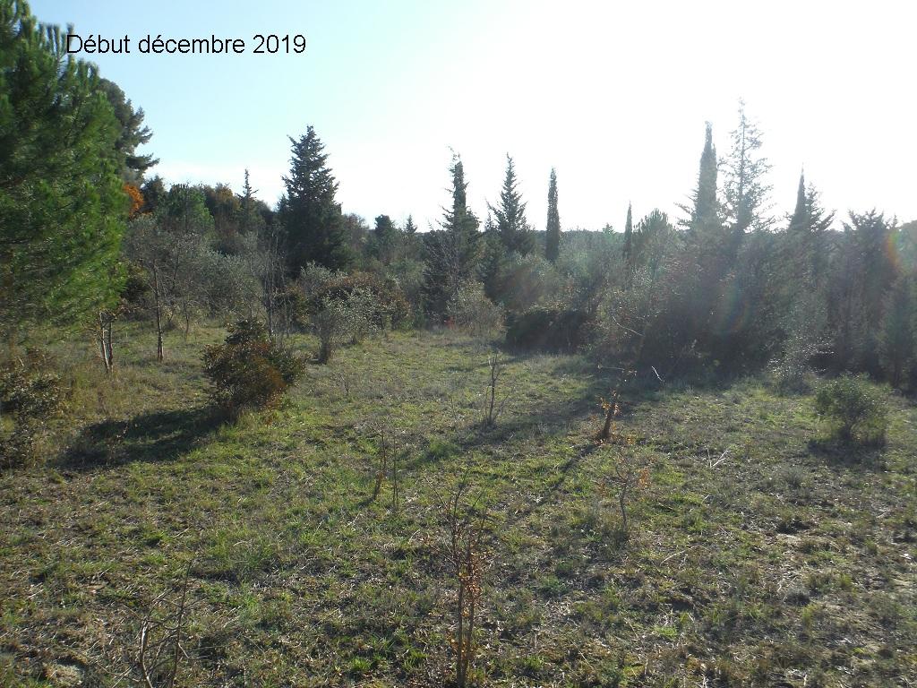 JdB de 4 hectares de pâtures dans le SUD : Janvier à la diète... + expérimentation - Page 13 5041pa10