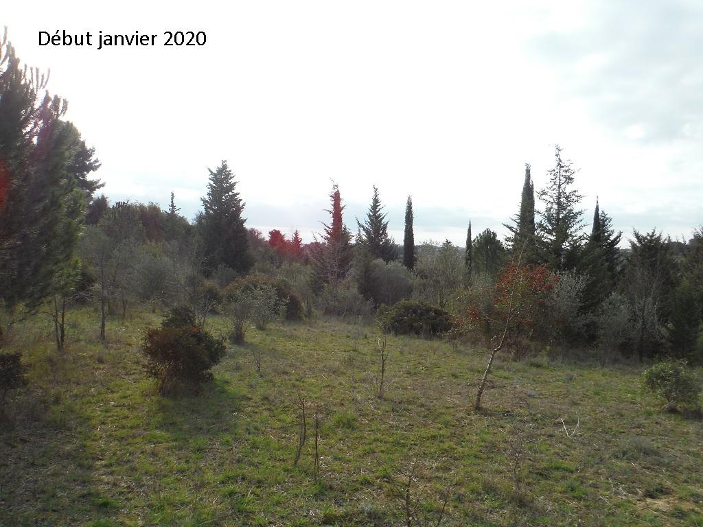 JdB de 4 hectares de pâtures dans le SUD : Janvier à la diète... + expérimentation - Page 13 5042pa10