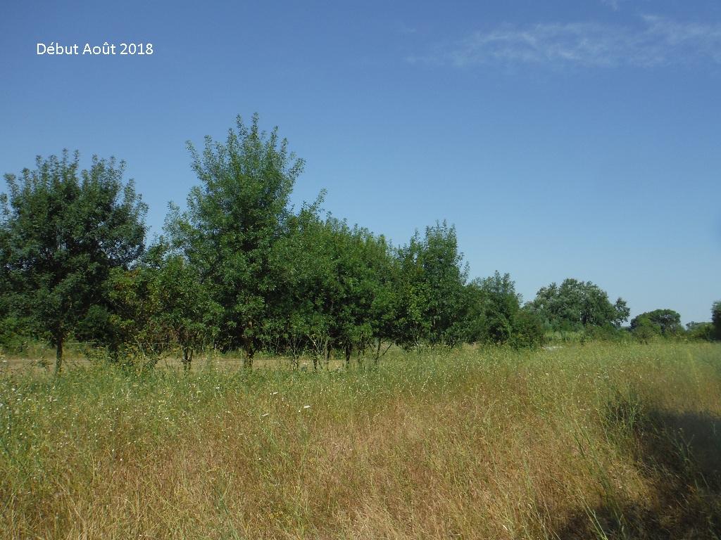JdB de 4 hectares de pâtures dans le SUD : Avril 2019, et toujours la sécheresse... - Page 9 6026pa10