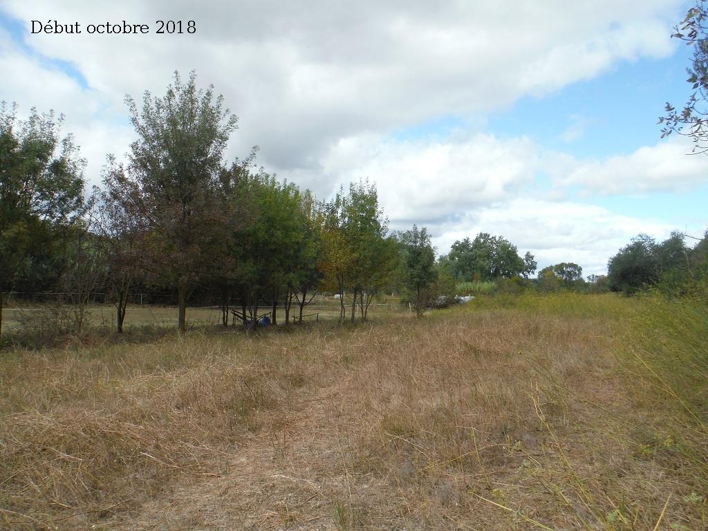 JdB de 4 hectares de pâtures dans le SUD : Avril 2019, et toujours la sécheresse... - Page 9 6027pa10