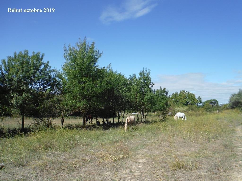 JdB de 4 hectares de pâtures dans le SUD : Timide reprise après 8 mois de sécheresse - Page 13 6039pa10