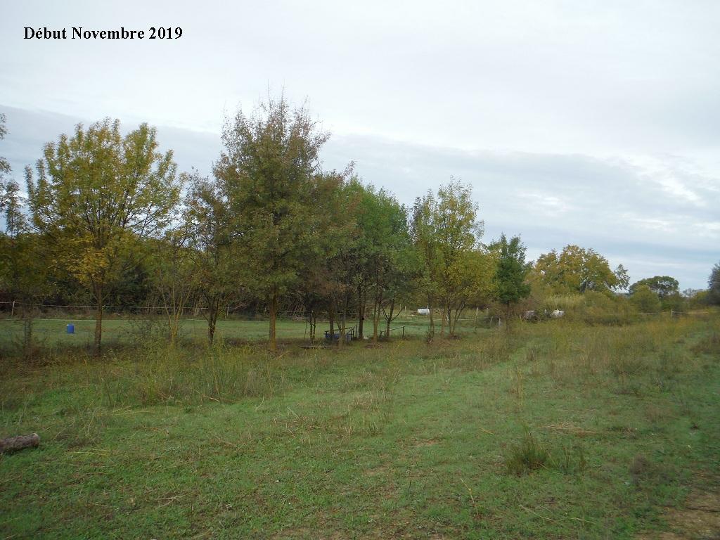JdB de 4 hectares de pâtures dans le SUD : Janvier à la diète... + expérimentation - Page 13 6040pa10