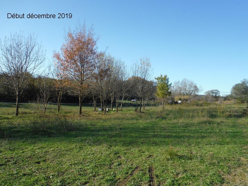 JdB de 4 hectares de pâtures dans le SUD : Janvier à la diète... + expérimentation - Page 13 6041pa10