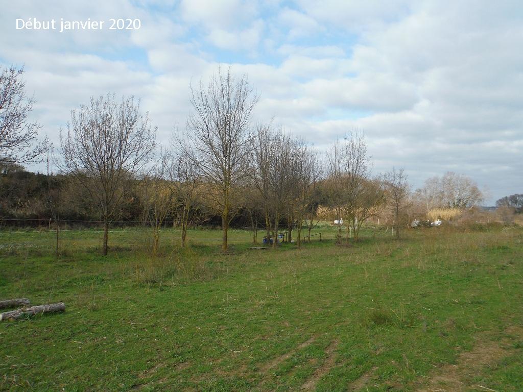 JdB de 4 hectares de pâtures dans le SUD : Janvier à la diète... + expérimentation - Page 13 6042pa10