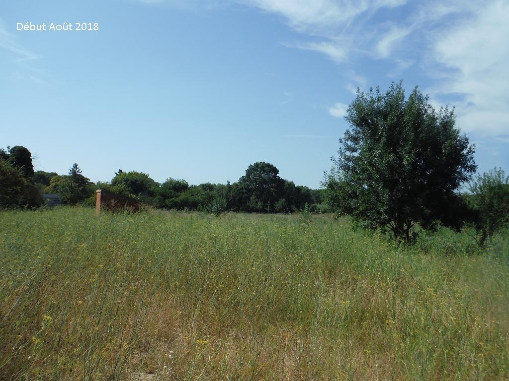 JdB de 4 hectares de pâtures dans le SUD : Avril 2019, et toujours la sécheresse... - Page 9 7026pa10