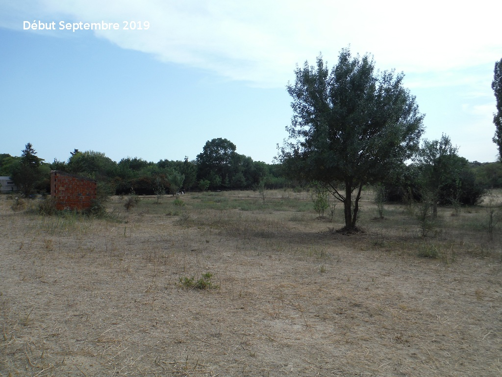 JdB de 4 hectares de pâtures dans le SUD : Timide reprise après 8 mois de sécheresse - Page 13 7038pa10
