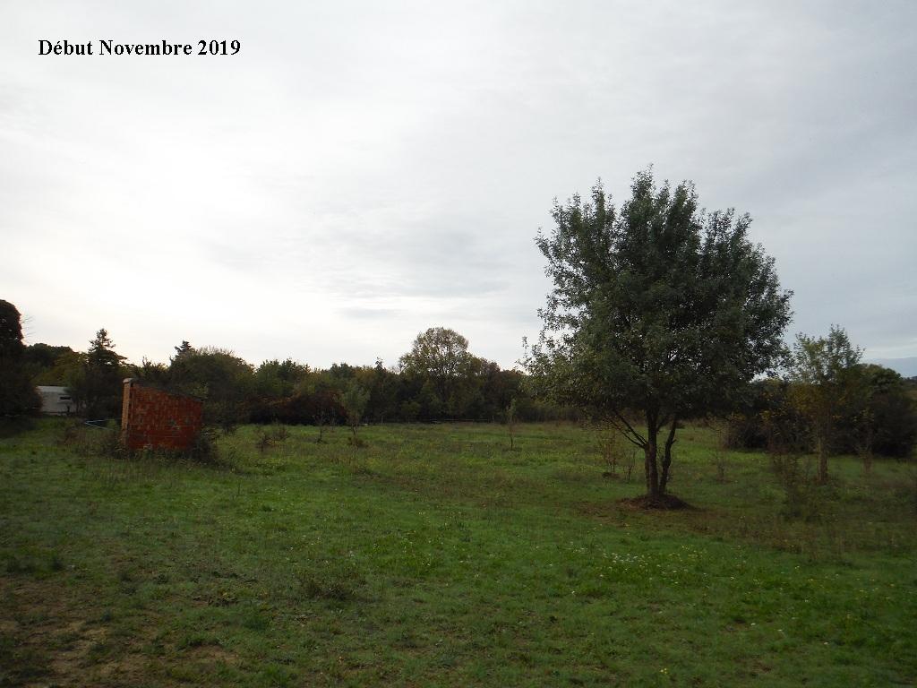 JdB de 4 hectares de pâtures dans le SUD : Janvier à la diète... + expérimentation - Page 13 7040pa10