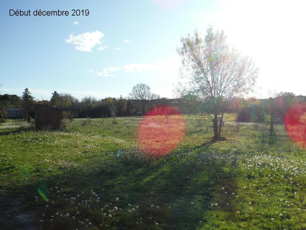 JdB de 4 hectares de pâtures dans le SUD : Janvier à la diète... + expérimentation - Page 13 7041pa10