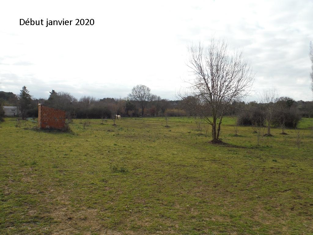 JdB de 4 hectares de pâtures dans le SUD : Janvier à la diète... + expérimentation - Page 13 7042pa10