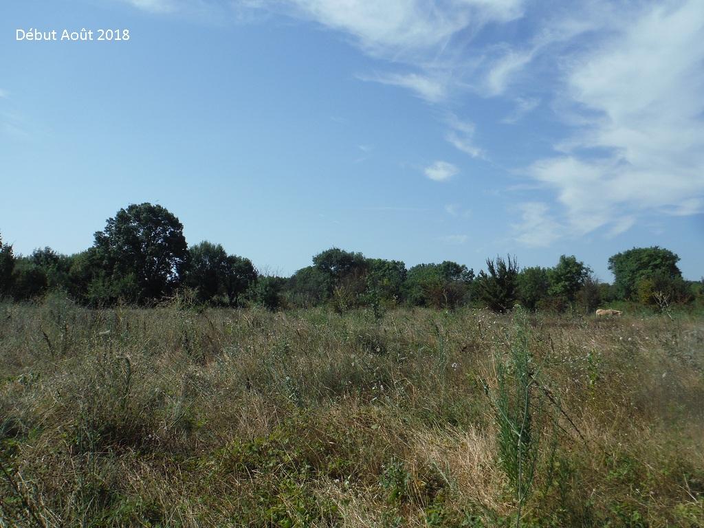JdB de 4 hectares de pâtures dans le SUD : Avril 2019, et toujours la sécheresse... - Page 9 8026pa10