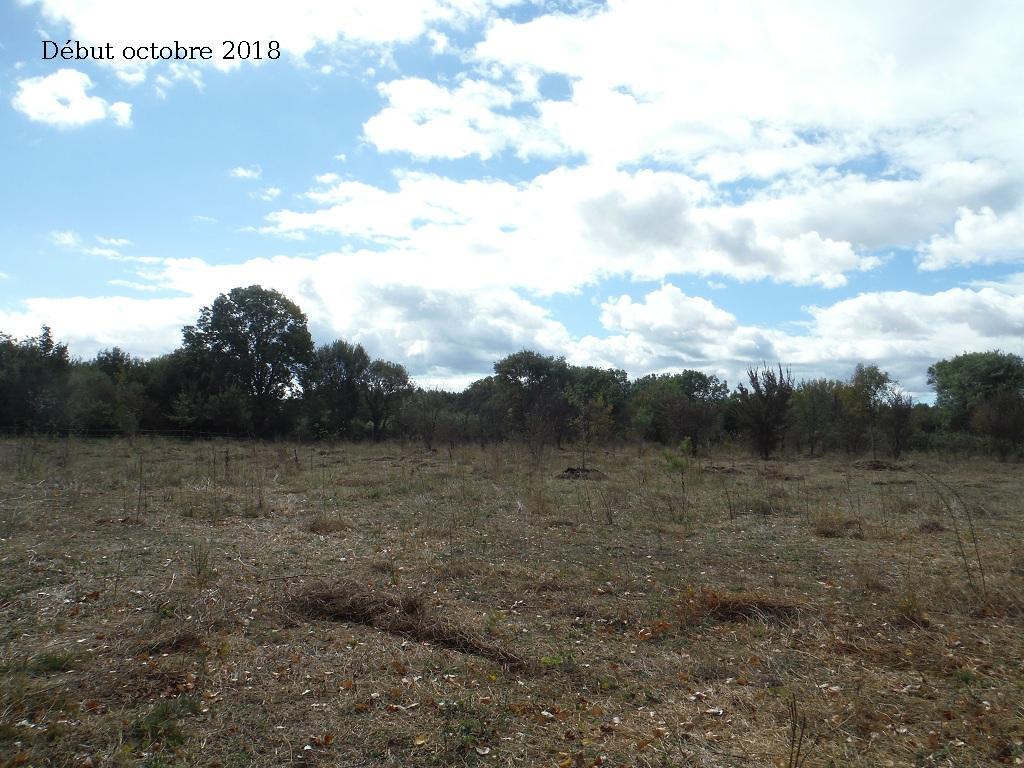 JdB de 4 hectares de pâtures dans le SUD : Avril 2019, et toujours la sécheresse... - Page 9 8027pa10