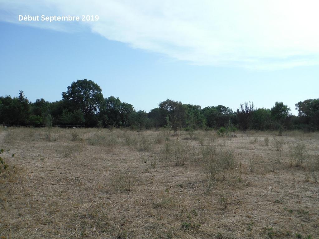 JdB de 4 hectares de pâtures dans le SUD : Timide reprise après 8 mois de sécheresse - Page 13 8038pa10