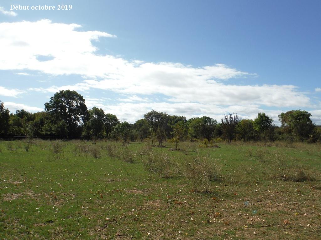JdB de 4 hectares de pâtures dans le SUD : Timide reprise après 8 mois de sécheresse - Page 13 8039pa10