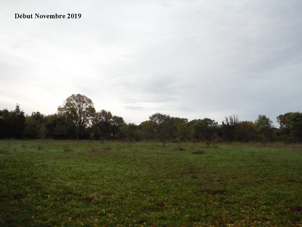 JdB de 4 hectares de pâtures dans le SUD : Janvier à la diète... + expérimentation - Page 13 8040pa10