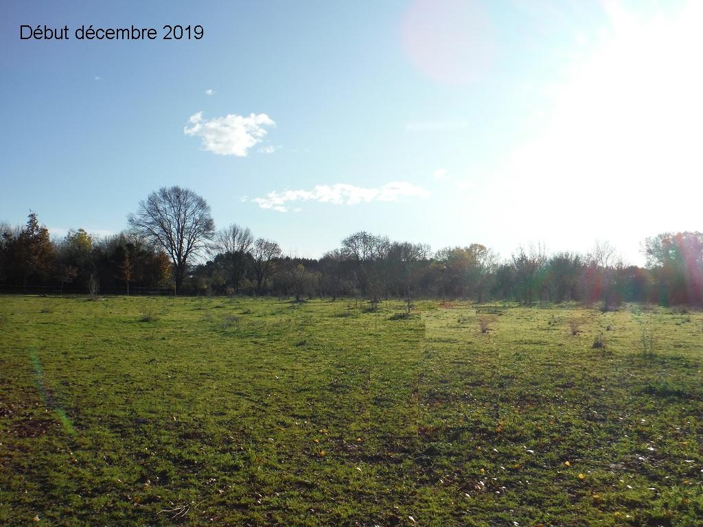 JdB de 4 hectares de pâtures dans le SUD : Janvier à la diète... + expérimentation - Page 13 8041pa10