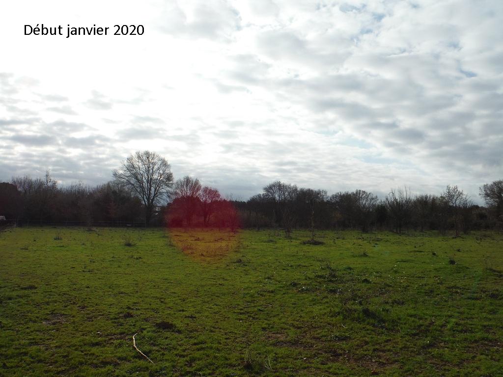 JdB de 4 hectares de pâtures dans le SUD : Janvier à la diète... + expérimentation - Page 13 8042pa10
