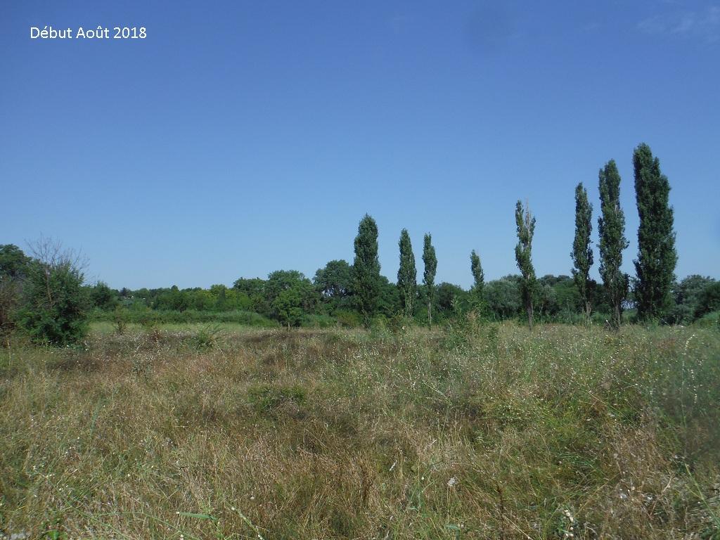 JdB de 4 hectares de pâtures dans le SUD : Avril 2019, et toujours la sécheresse... - Page 9 9026pa10