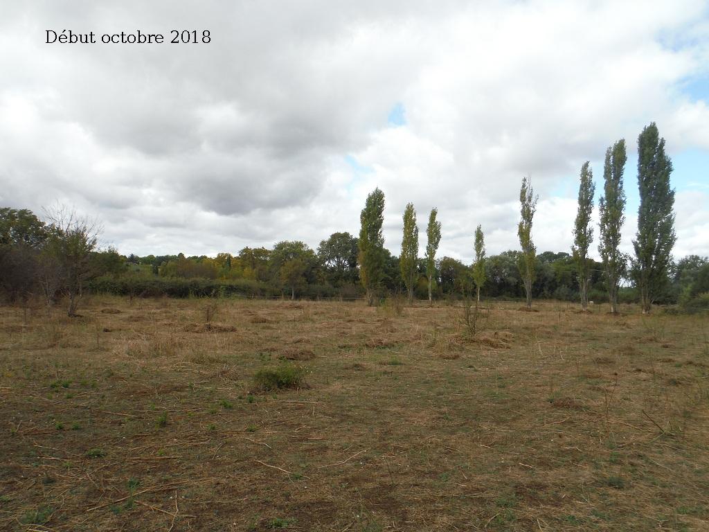 JdB de 4 hectares de pâtures dans le SUD : Avril 2019, et toujours la sécheresse... - Page 9 9027pa10