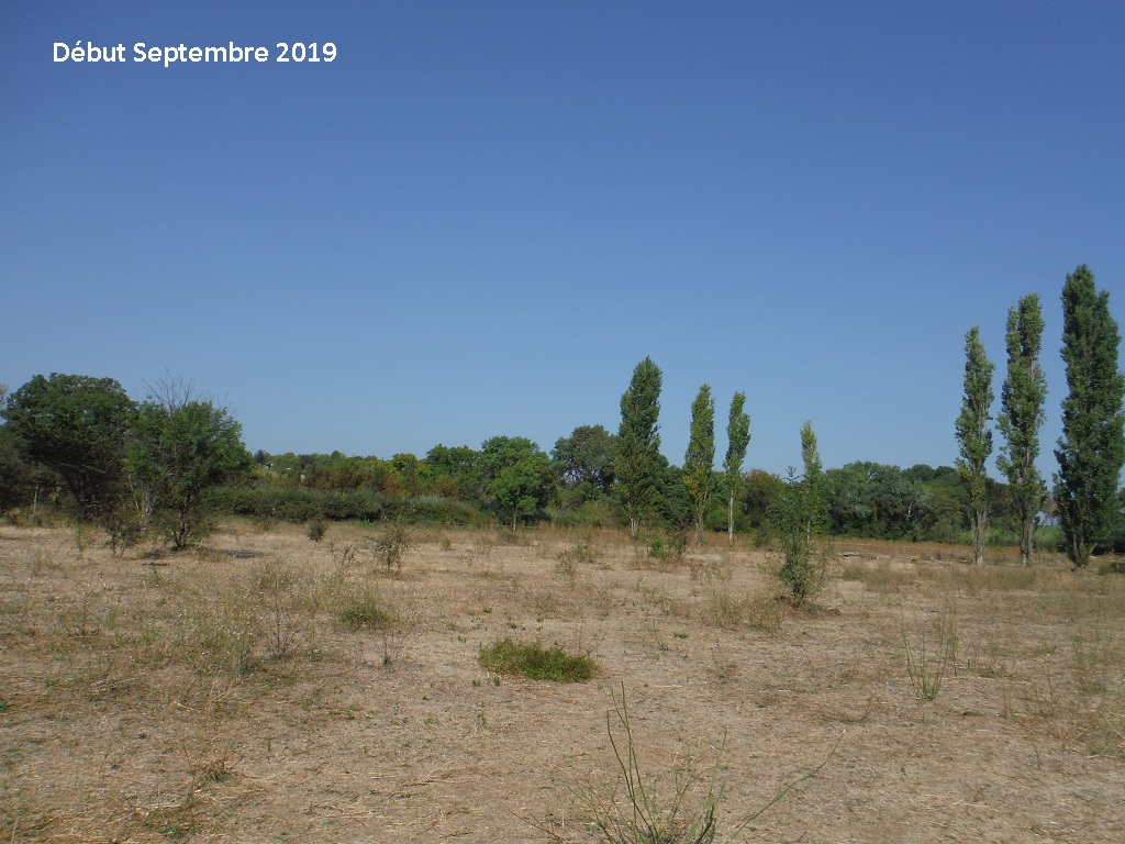 JdB de 4 hectares de pâtures dans le SUD : Timide reprise après 8 mois de sécheresse - Page 13 9038pa10