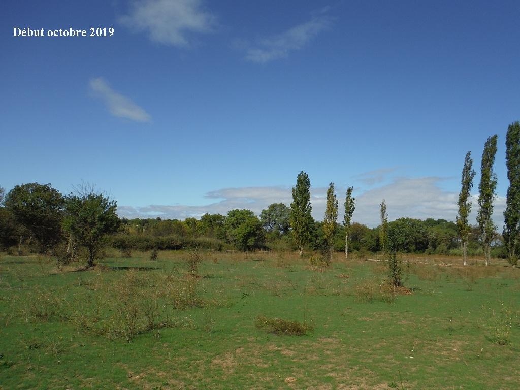 JdB de 4 hectares de pâtures dans le SUD : Timide reprise après 8 mois de sécheresse - Page 13 9039pa10