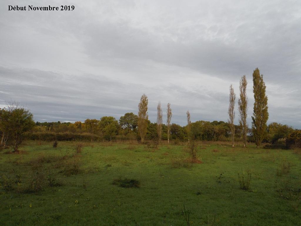 JdB de 4 hectares de pâtures dans le SUD : Janvier à la diète... + expérimentation - Page 13 9040pa10