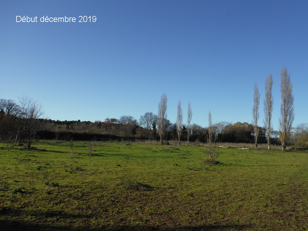 JdB de 4 hectares de pâtures dans le SUD : Janvier à la diète... + expérimentation - Page 13 9041pa10