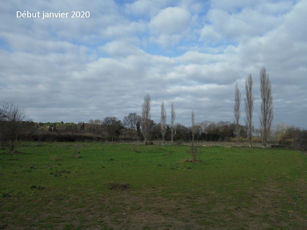 JdB de 4 hectares de pâtures dans le SUD : Janvier à la diète... + expérimentation - Page 13 9042pa10