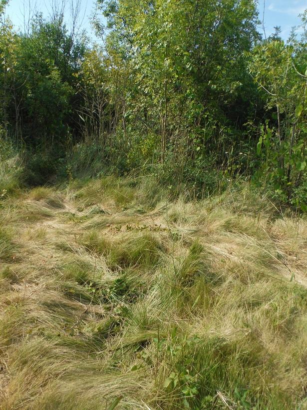 JdB de 4 hectares de pâtures dans le SUD : Avril 2019, et toujours la sécheresse... - Page 9 Dscf5310