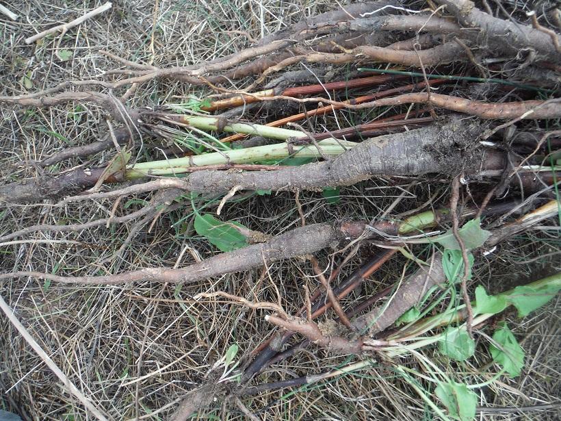 JdB de 4 hectares de pâtures dans le SUD : Avril 2019, et toujours la sécheresse... - Page 9 Dscf6011