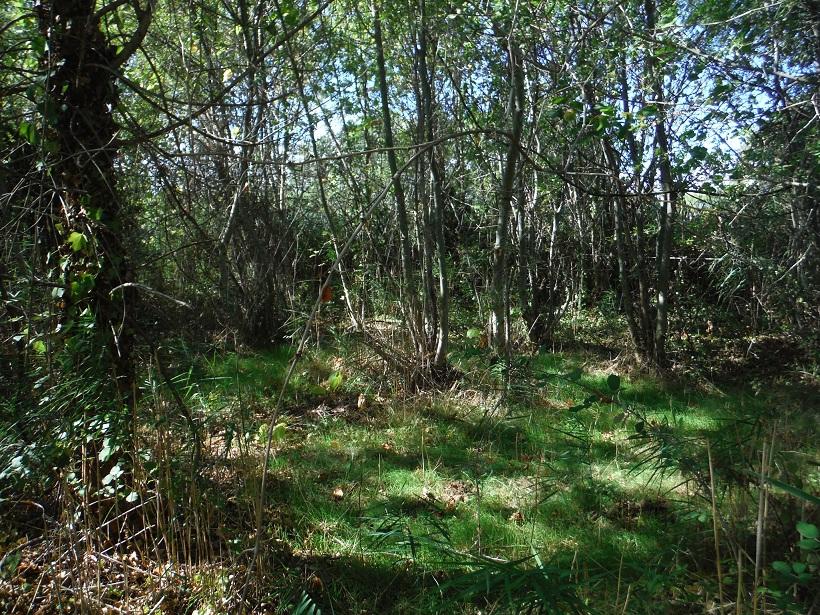 JdB de 4 hectares de pâtures dans le SUD : Timide reprise après 8 mois de sécheresse - Page 13 Dscf6416