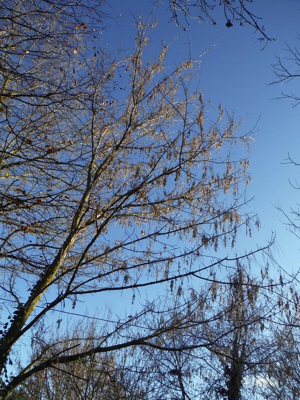 JdB de 4 hectares de pâtures dans le SUD : Janvier à la diète... + expérimentation - Page 13 Dscf7418