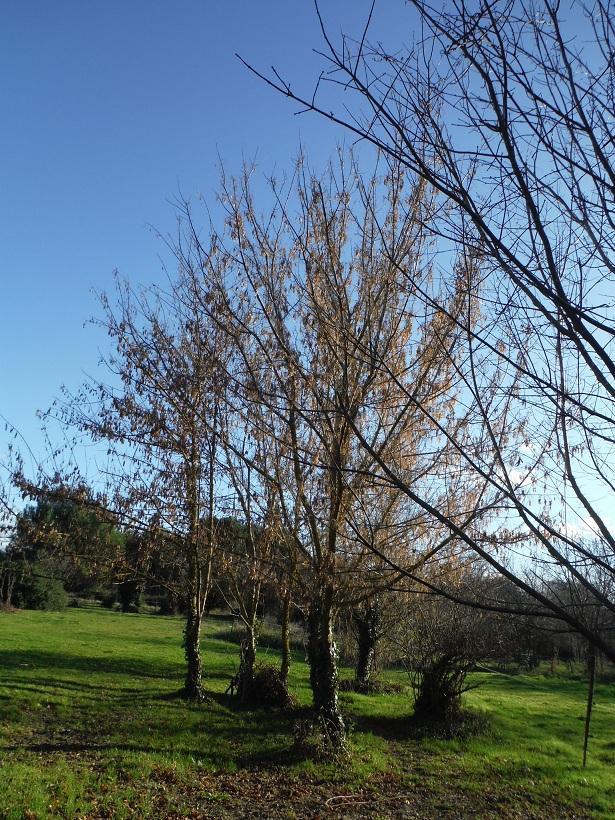 JdB de 4 hectares de pâtures dans le SUD : Janvier à la diète... + expérimentation - Page 13 Dscf7419