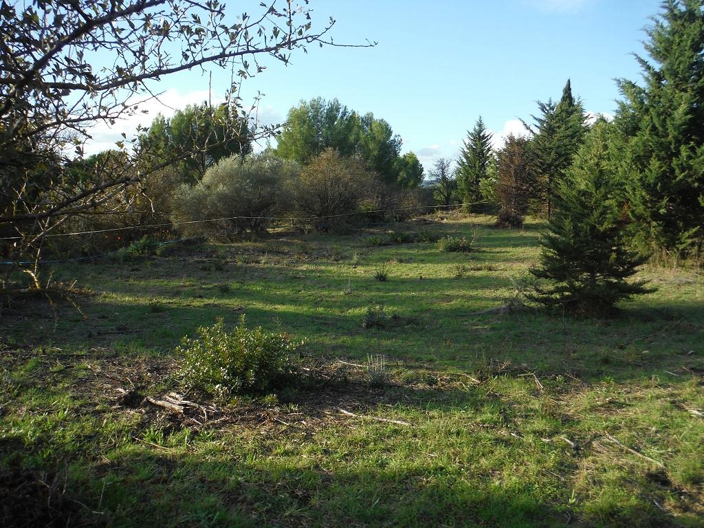 JdB de 4 hectares de pâtures dans le SUD : Avril 2019, et toujours la sécheresse... - Page 9 Dscf7821