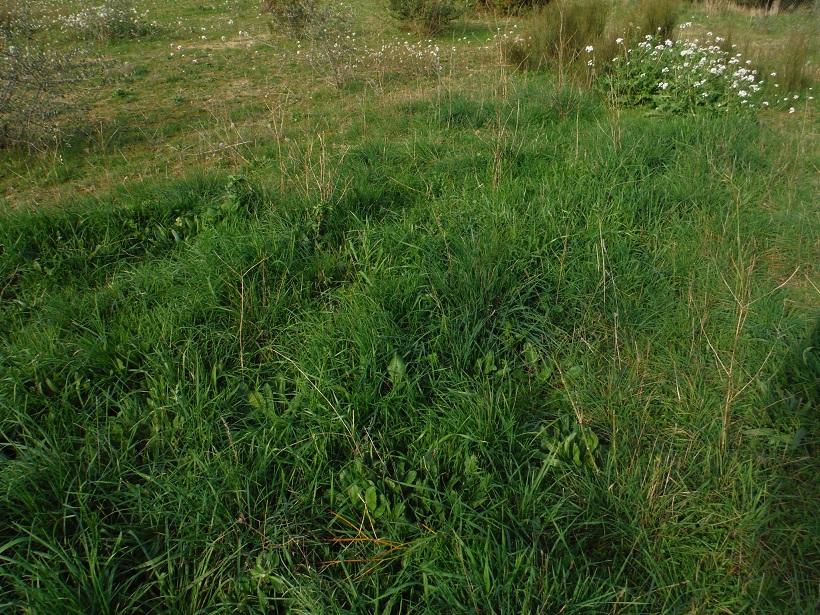 JdB de 4 hectares de pâtures dans le SUD : Janvier à la diète... + expérimentation - Page 13 Dscf8422