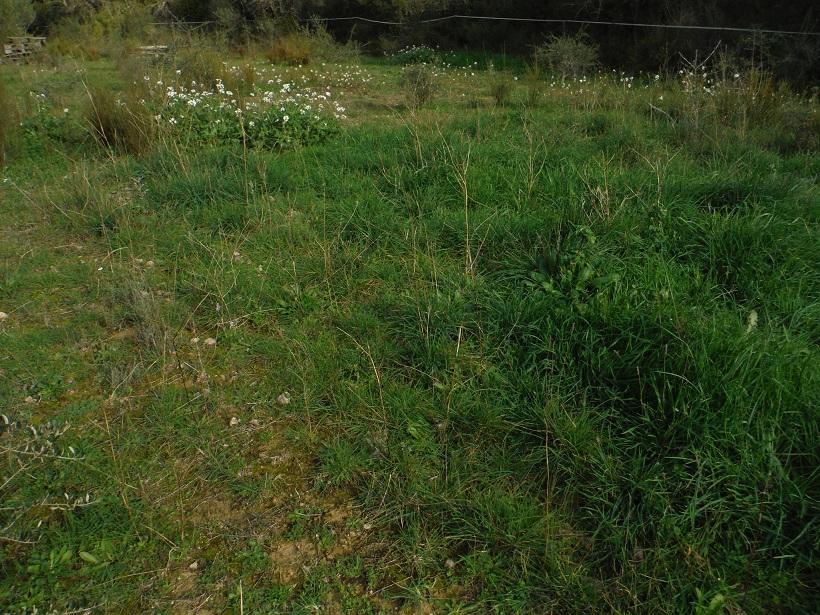 JdB de 4 hectares de pâtures dans le SUD : Janvier à la diète... + expérimentation - Page 13 Dscf8423