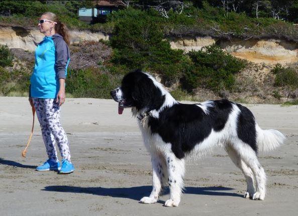 La marche nordique avec son chien qqun a t-il testé? Captur12
