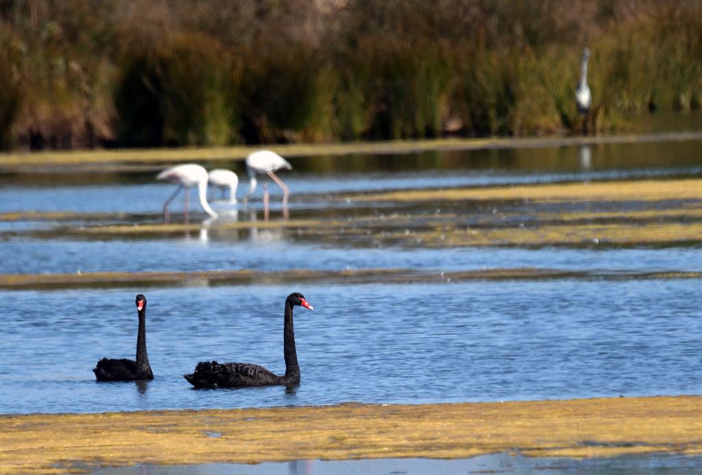 Fórum Aves - Birdwatching em Portugal - Portal Dsc_7010