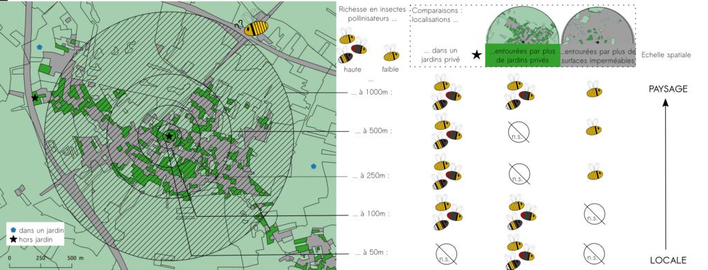 Nouvel article grâce au Spipoll : insectes floricoles et jardins privés ... Resume10