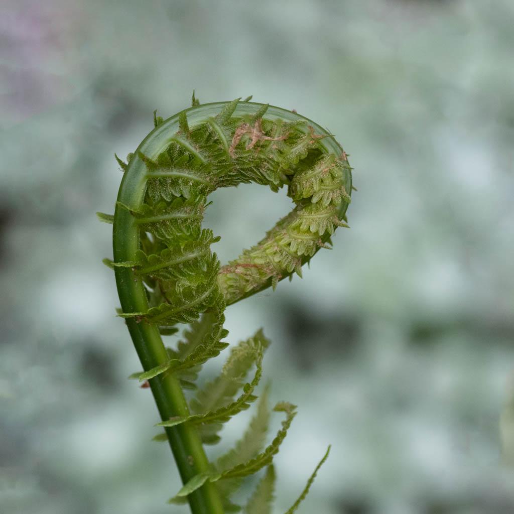 Macros/  proxi/  insectes  - Page 21 K1_08410