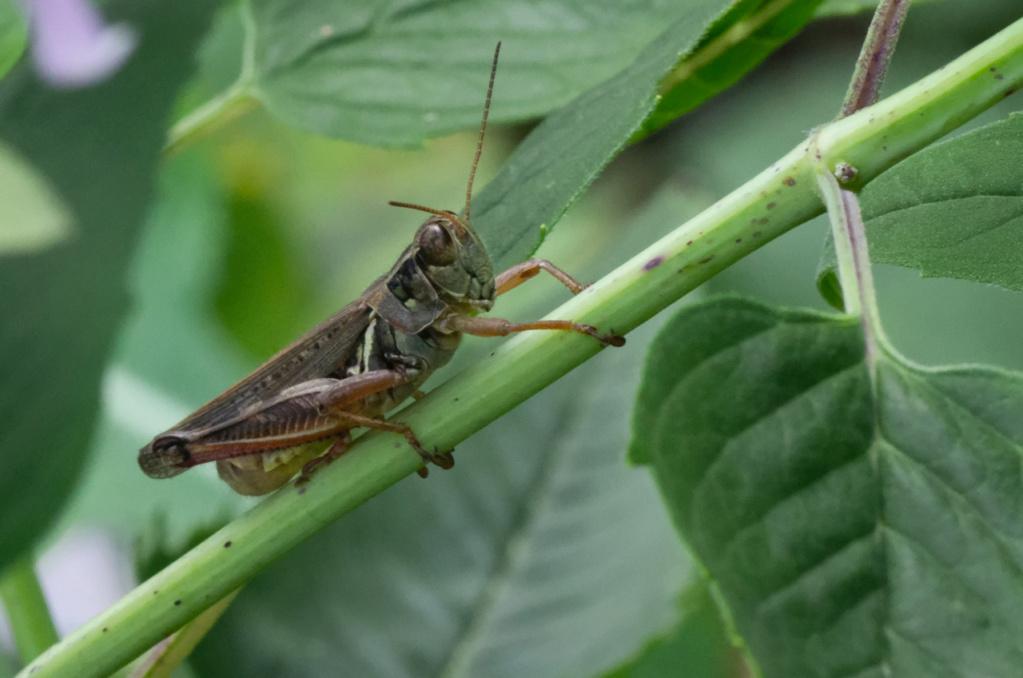 Macros/  proxi/  insectes  - Page 8 K5_86710