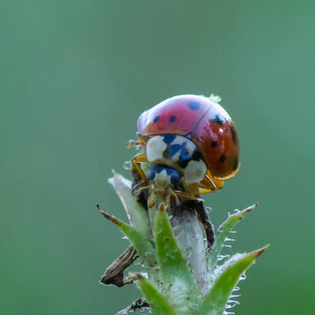 Macros/  proxi/  insectes  - Page 14 K5_87711