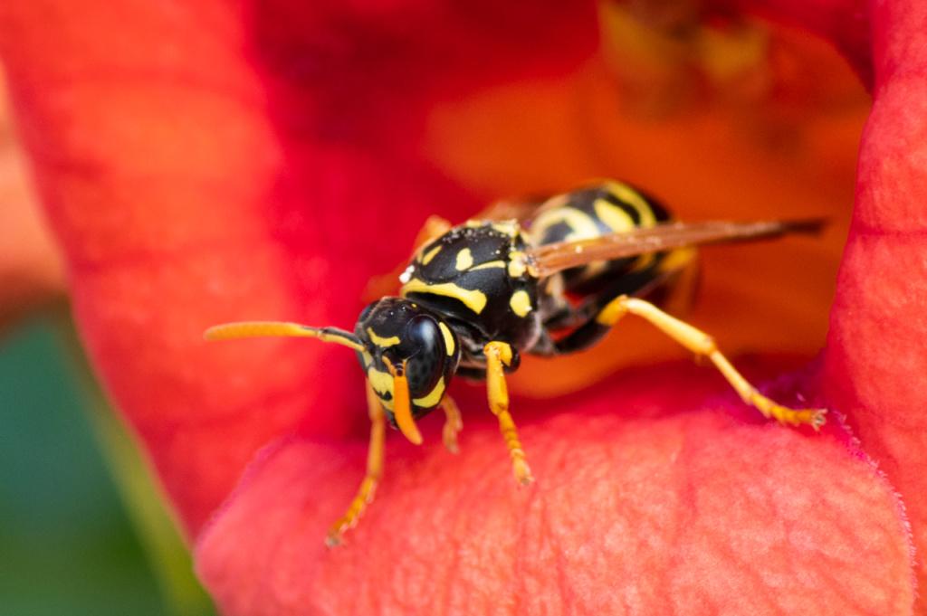 Macros/  proxi/  insectes  - Page 2 Kp_30810