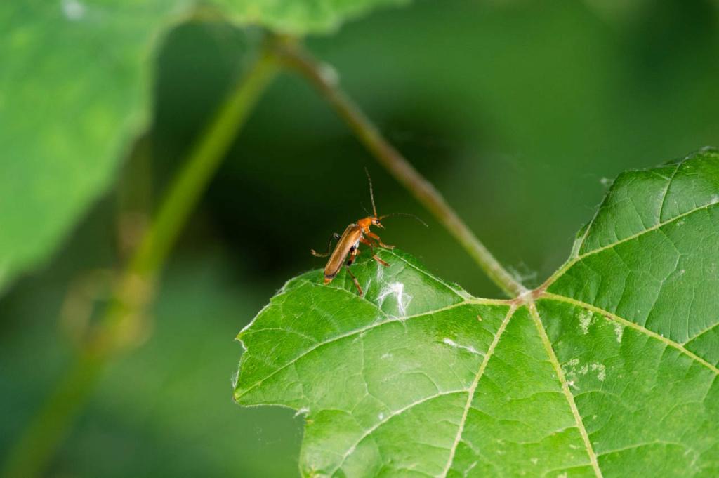 Macros/  proxi/  insectes  - Page 3 Kp_83911